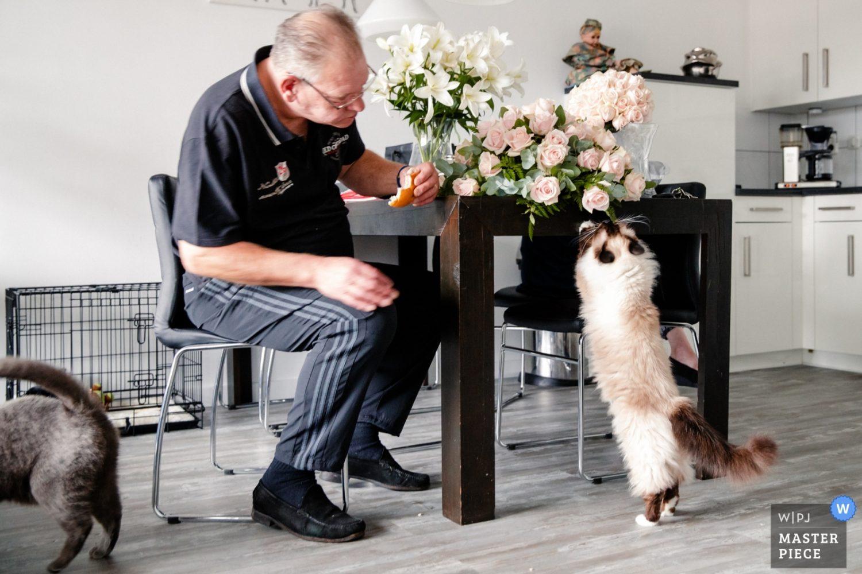 Het bruidsboeket wordt op de keukentafel nog even gecontroleerd door de katten terwijl de vader van de bruidegom nog even een broodje eet.