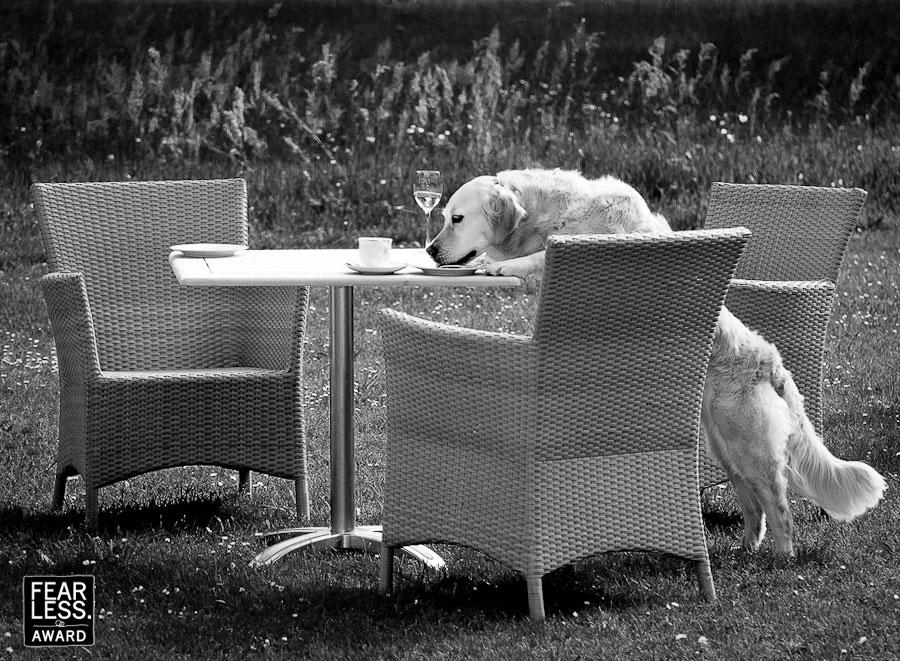 Waarom zou een hond niet gewoon ook van een glaasje wijn, kopje koffie en stukje taart kunnen genieten? De hond staat op zijn achterpoten en eet de stujes taart van de tafel terwijl een glaasje wijn en een kopje koffie op de tafel staan.